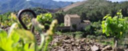 Els nostres vins DOQ Priorat